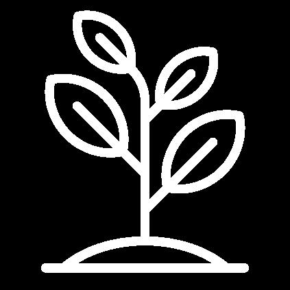 El proyecto Life Reforest, tiene una duración de 36 meses.