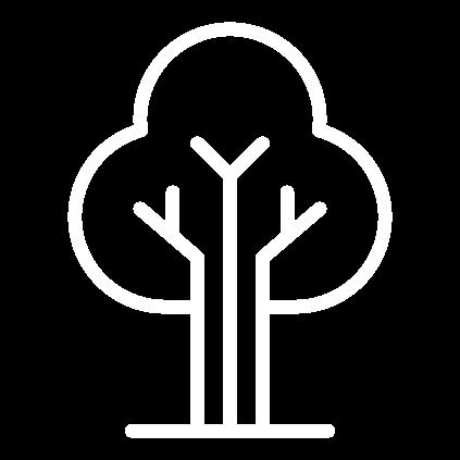 El proyecto Life Reforest, termina en junio de 2021.